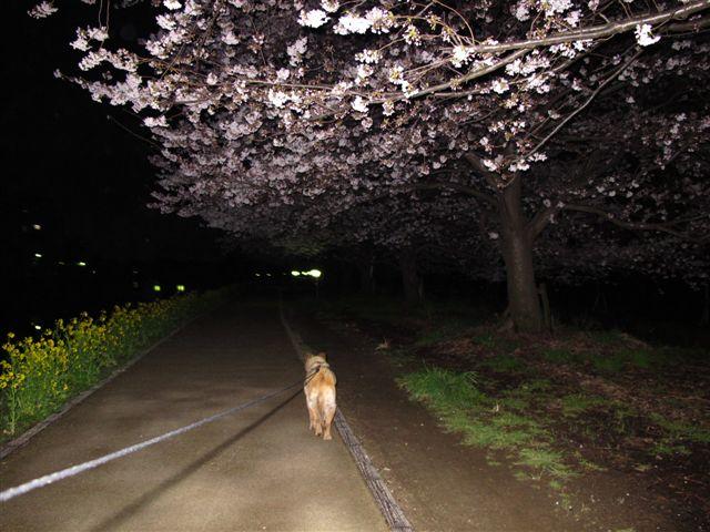 桜 174.jpg