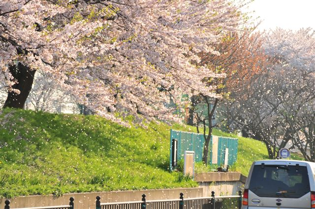 桜 513.jpg